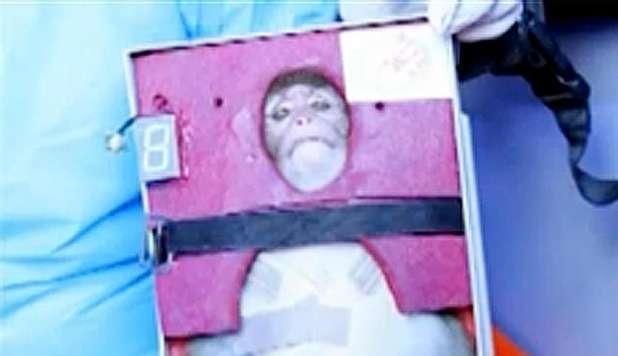 iran-scimmia-spaziale